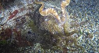 Bautismo de buceo en La Coruña