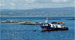 Gastronomy mussels catamaran