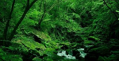 Naturaleza salvaje: Fragas de Eume