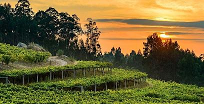 Oenological Gateway & Pazos de Galicia. The Camellia Route